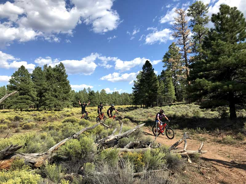RIDE-run-the-canyons-mountainbike-rejser-grand-canyon-skov